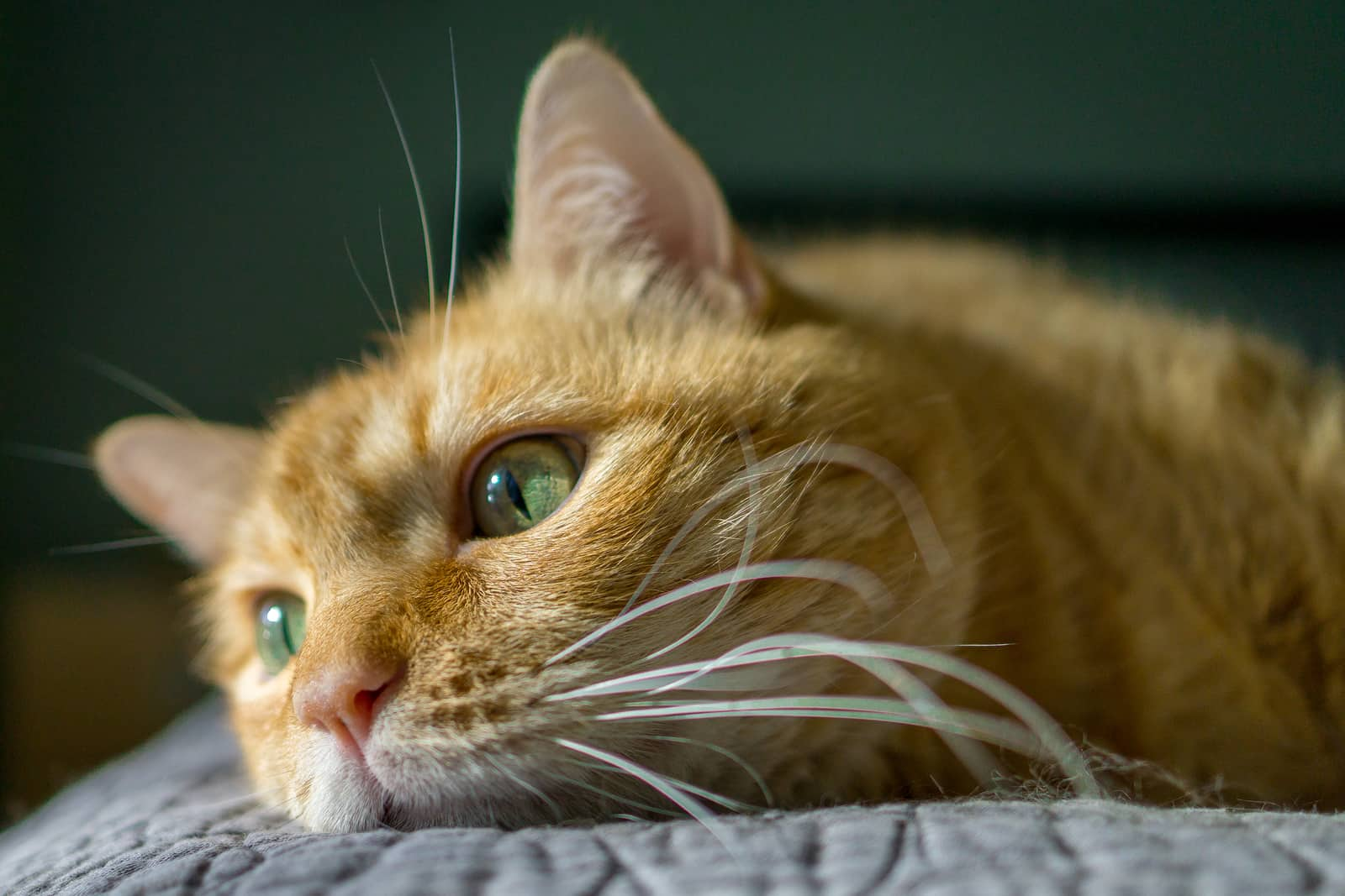 Orange tabby cat with green eyes flopped on a bedspread