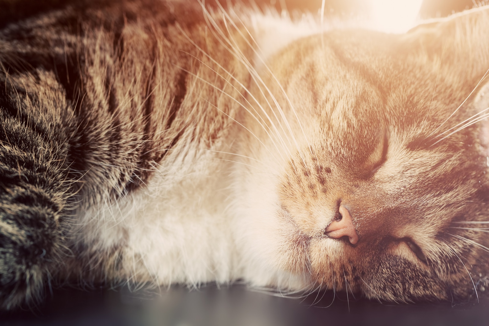 Striped cat sleeps with sunrays glowing on her.