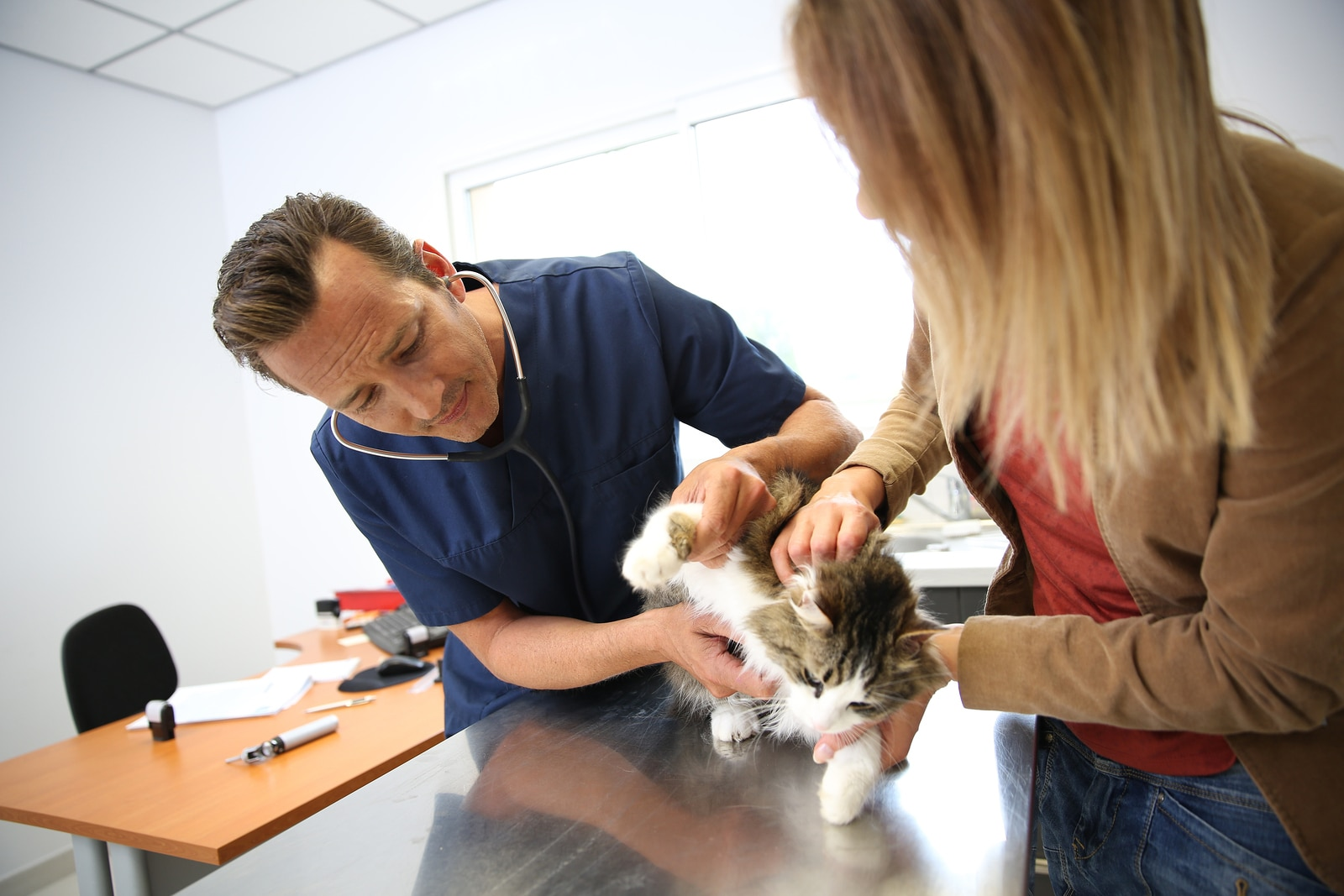 Male veterinarian inspects a cat on a table, while the female owner holds her.