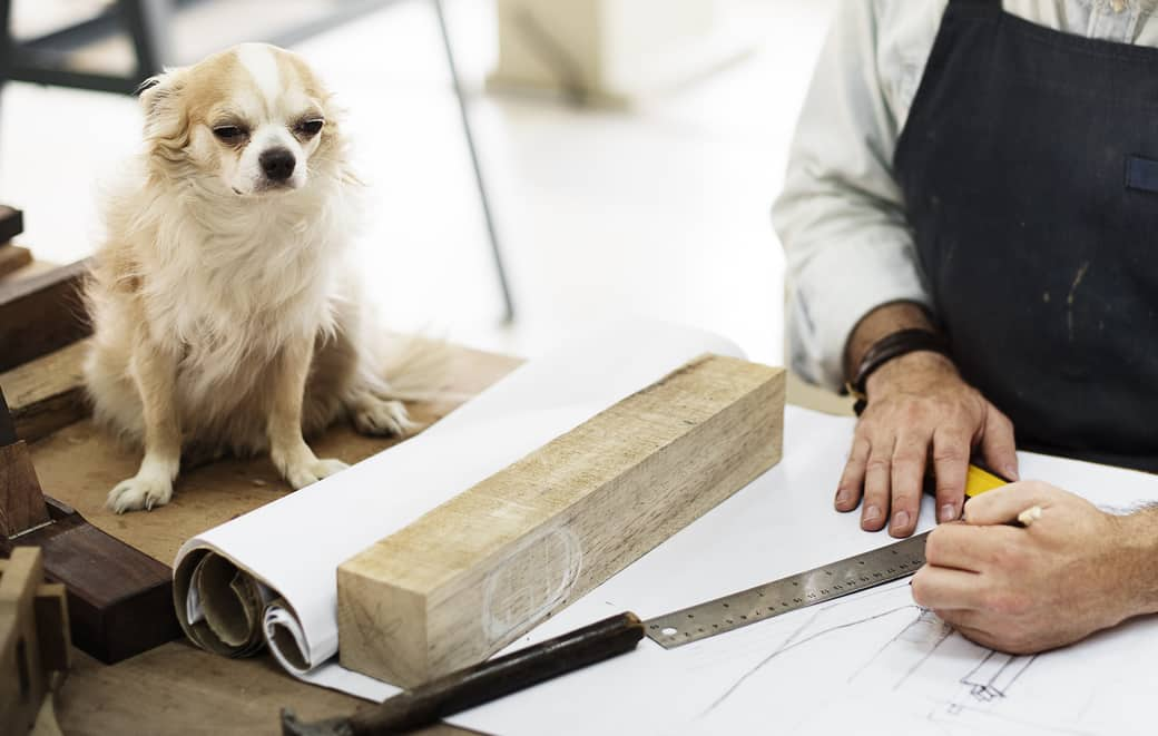 Chihuahua overseeing carpenter drafting plans