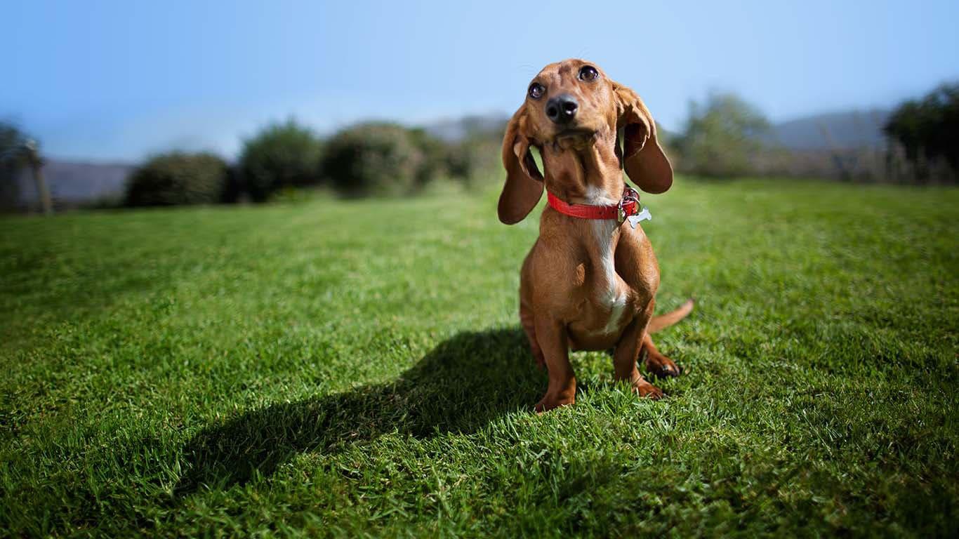 Hill s Pet Nutrition - Dog   Cat Food Transforming Lives 3a1e3782bc9a3