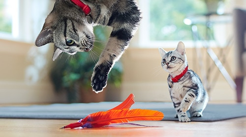 cats playing with feather