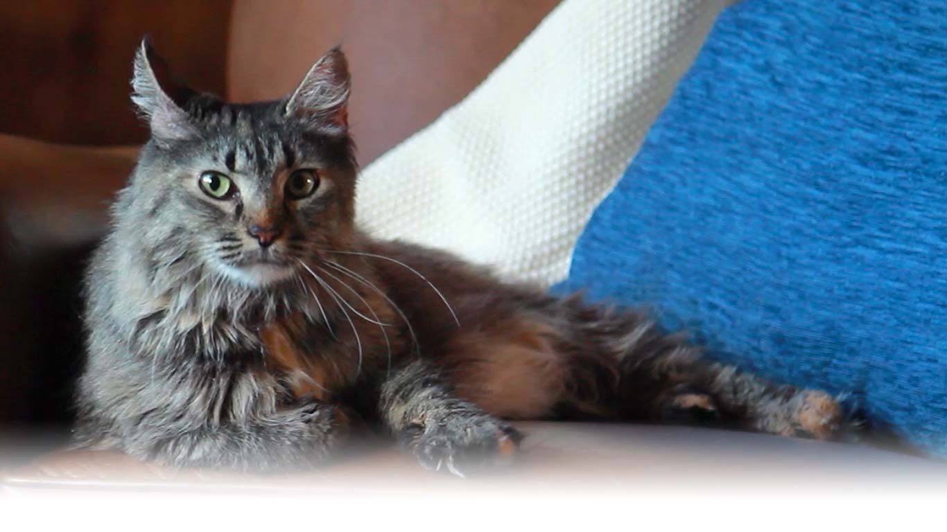 Hill s Pet Nutrition - Dog   Cat Food Transforming Lives a0dae6ac262e